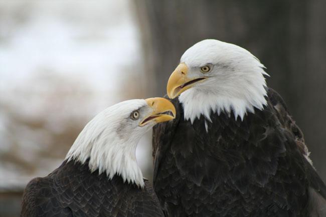 Eagles--1-20-07.jpg